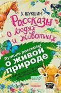 Василий Шукшин -Рассказы о людях и животных. С вопросами и ответами для почемучек