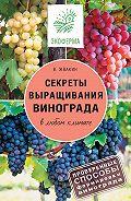 Виктор Жвакин - Секреты выращивания винограда в любом климате. Проверенные способы формировки винограда