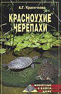 Анастасия Красичкова - Красноухие черепахи