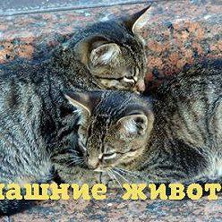Марина Селиванова - Почему мурлыкает кошка?