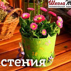 Сергей Денисевич - Путаница, или Почему так назвали цветы?
