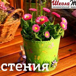 Андрей Рябоконь - Грецкий орех. В чем его целительная сила?