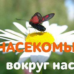 Валентина Пономарева - Зачем тебе жужжать, если ты не пчела? Европейская символика образа