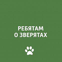 Творческий коллектив программы «Пора домой» - Язык человека и животного