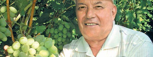 Виноградные грозди Черноземья