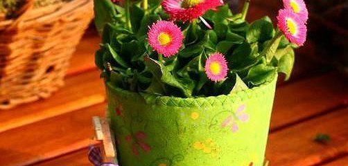 Что мы знаем о растениях - знаках цветочного гороскопа? Горечавка желтая.