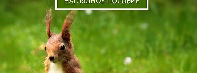 РАСТИТЕЛЬНЫЙ ИЖИВОТНЫЙ МИР ПРИРОДНЫХ ЗОН РОССИИ. Наглядное пособие