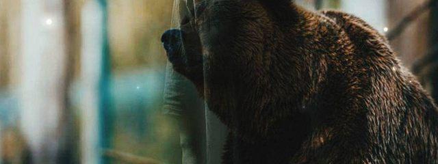 Сказки моей Медведицы. Часть 1