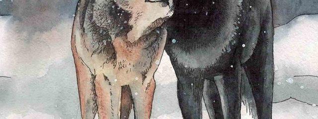 Волки. Оправдательный приговор