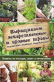 Наталия Костина-Кассанелли - Выращиваем лекарственные и пряные травы на участке, балконе, подоконнике. Советы по посадке, сбору и применению