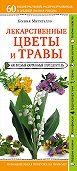 Ксения Митителло -Лекарственные растения и травы. Определитель трав русских лесов и полей