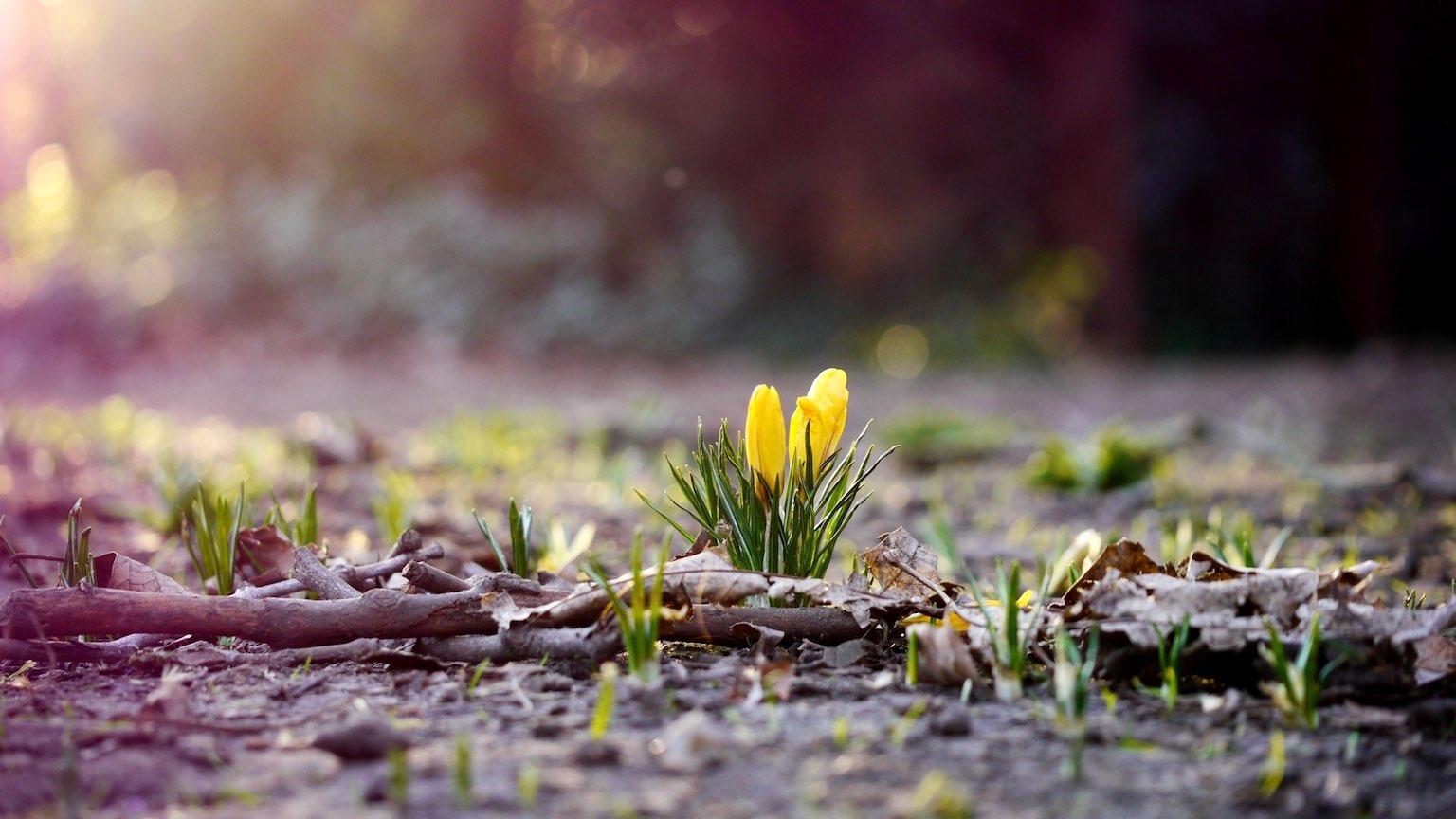 Весне дорогу
