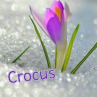 Максим Игошин -Crocus