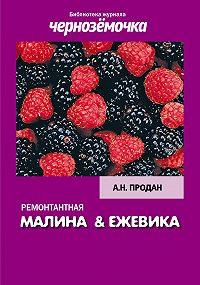 А. Продан -Ремонтантная малина и ежевика