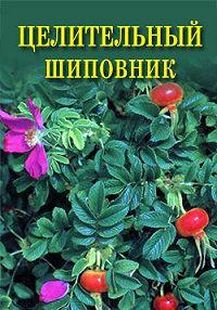 Иван Дубровин -Целительный шиповник