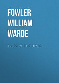 William Fowler -Tales of the birds