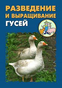 Илья Мельников -Разведение и выращивание гусей