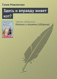 Галия Мавлютова -Здесь и вправду живет кот?