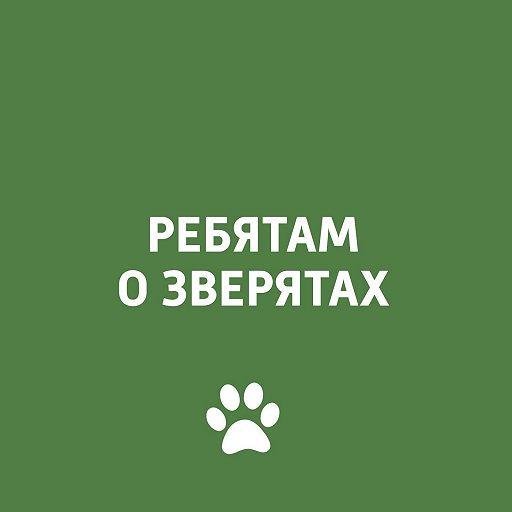 Дикие кошки